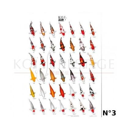 Poster couleurs carpes koi