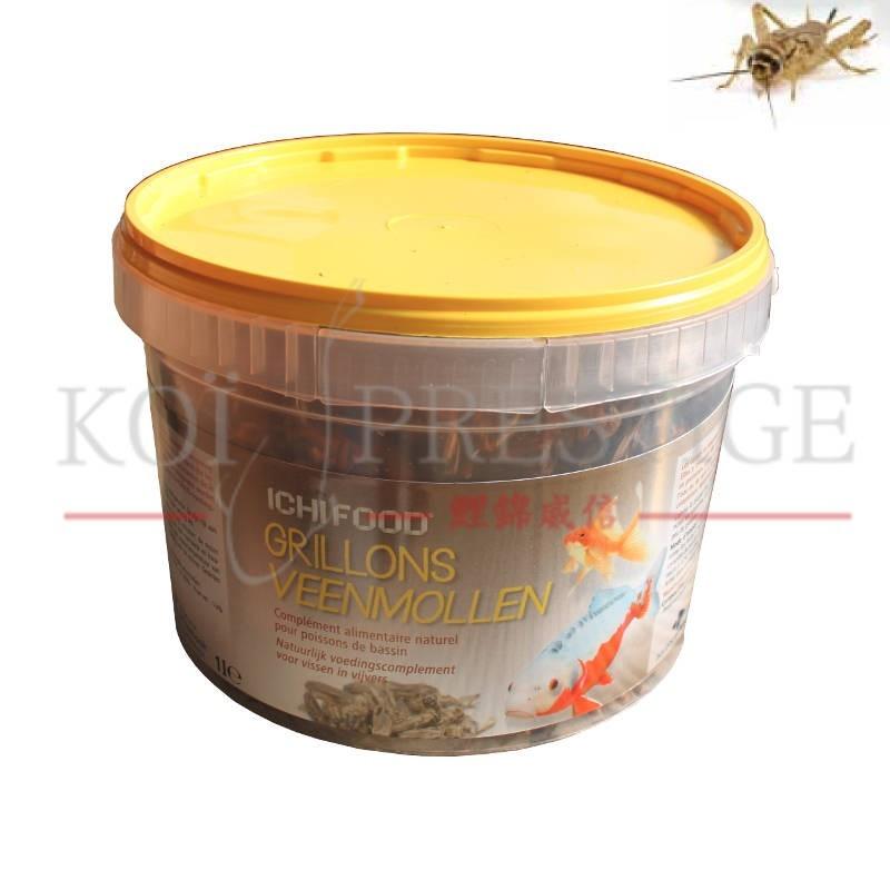 Ichi food grillons grillons 100 naturels pour carpe koi for Koi prestige