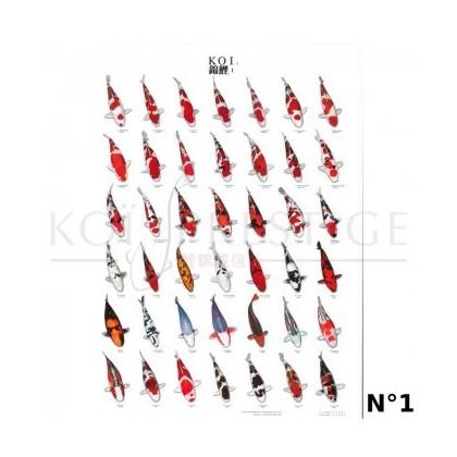 Poster variétés carpes koi