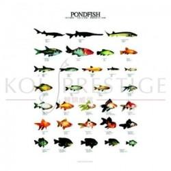Poster poissons de bassin
