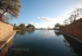 Traiter votre étang de jardin avec des solutions pro efficaces !