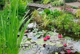 Matériel pour la culture des plantes aquatiques de bassin et d'étang.