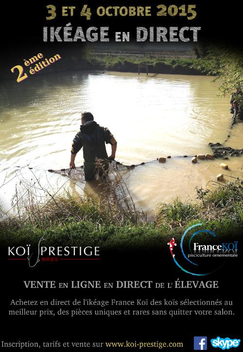 Journ e de vente directe de carpe koi depuis l 39 levage for Koi prestige